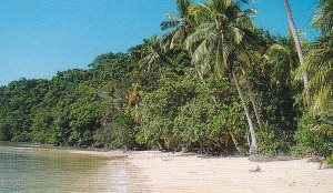 Qamea Island Beachfront