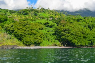 Lush rainforest and secluded beaches, Soqulu, Taveuni Estates, Fiji