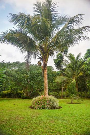 Tagimaucia, Soqulu, Taveuni, Fiji Islands (86)