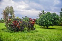 Tagimaucia, Soqulu, Taveuni, Fiji Islands (92)