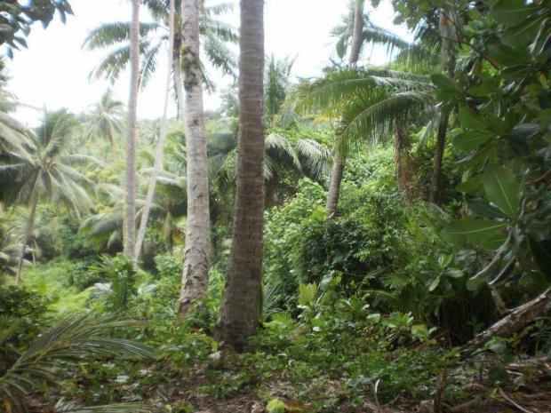 Niubavu Land 1