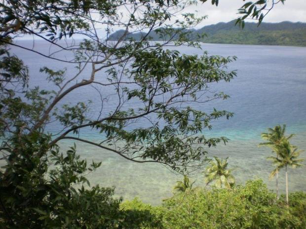 Niubavu View