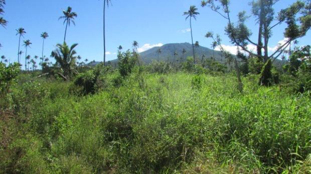 17-acres-farmland-south-taveuni-005