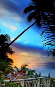 Taveuni Palms13