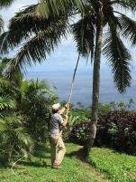 coconuts-e_1_orig