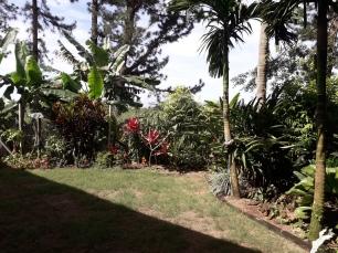 garden back